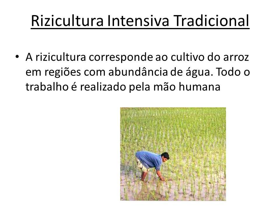 Rizicultura Intensiva Tradicional