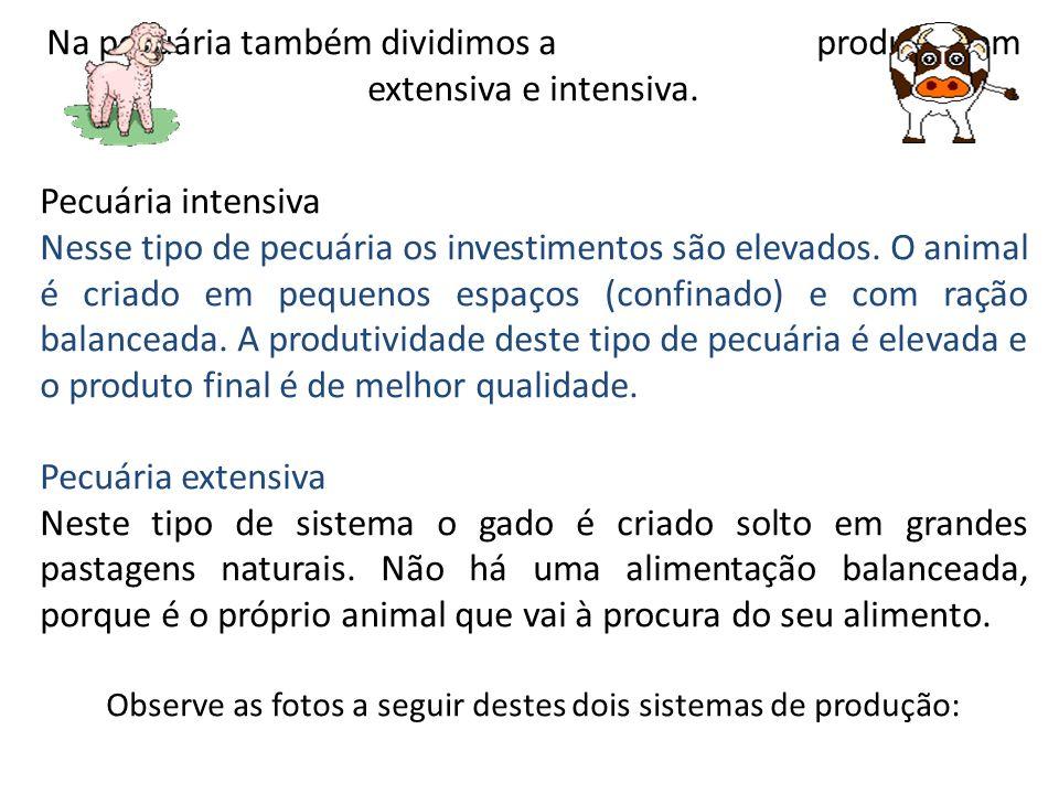 Na pecuária também dividimos a produção em extensiva e intensiva.