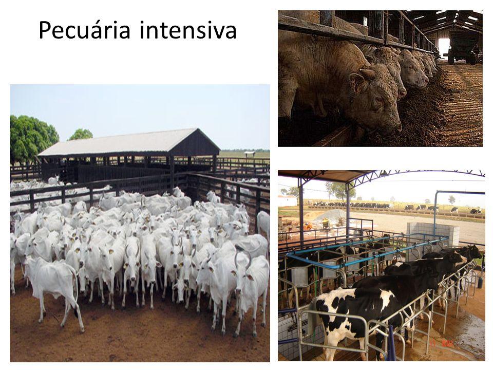 Pecuária intensiva