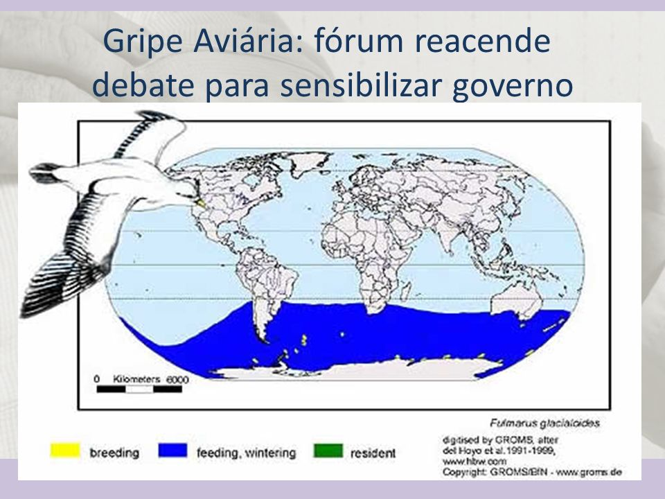 Gripe Aviária: fórum reacende debate para sensibilizar governo