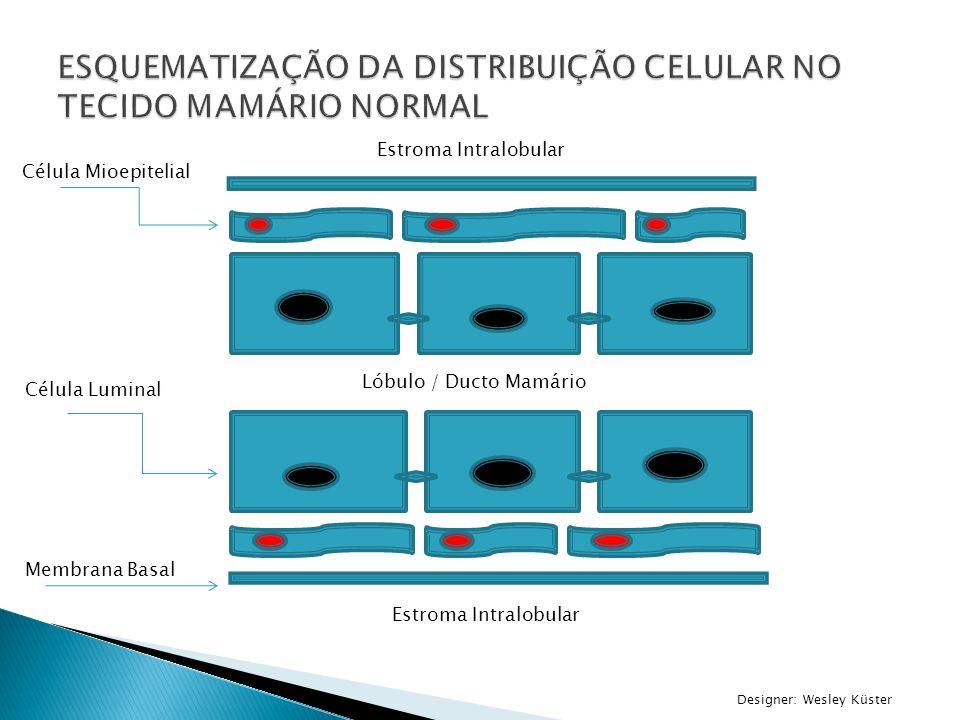 ESQUEMATIZAÇÃO DA DISTRIBUIÇÃO CELULAR NO TECIDO MAMÁRIO NORMAL