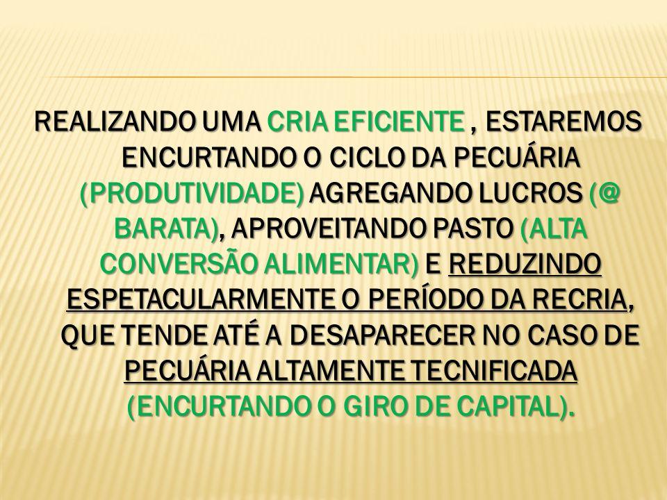 REALIZANDO UMA CRIA EFICIENTE , ESTAREMOS ENCURTANDO O CICLO DA PECUÁRIA (PRODUTIVIDADE) AGREGANDO LUCROS (@ BARATA), APROVEITANDO PASTO (ALTA CONVERSÃO ALIMENTAR) E REDUZINDO ESPETACULARMENTE O PERÍODO DA RECRIA, QUE TENDE ATÉ A DESAPARECER NO CASO DE PECUÁRIA ALTAMENTE TECNIFICADA (ENCURTANDO O GIRO DE CAPITAL).