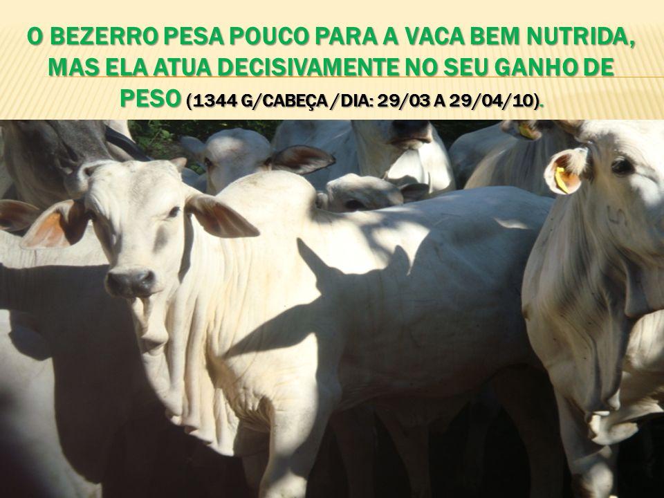 O bezerro pesa pouco para a vaca bem nutrida, mas ela atua decisivamente no seu ganho de peso (1344 G/cabeça /dia: 29/03 a 29/04/10).