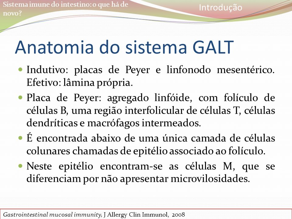 Anatomia do sistema GALT
