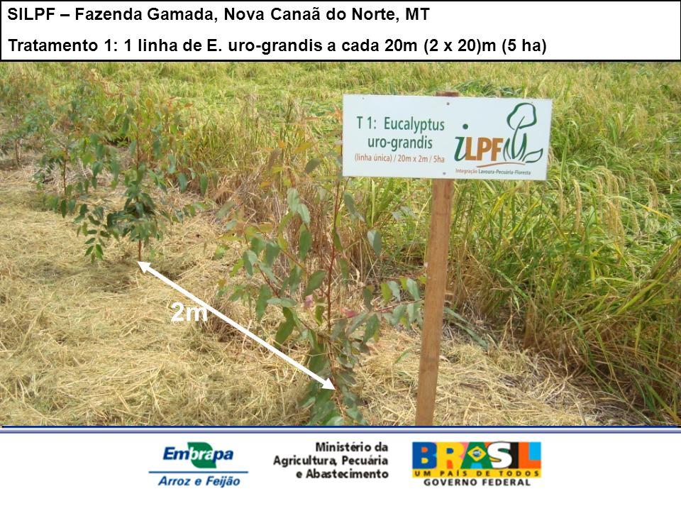 2m SILPF – Fazenda Gamada, Nova Canaã do Norte, MT