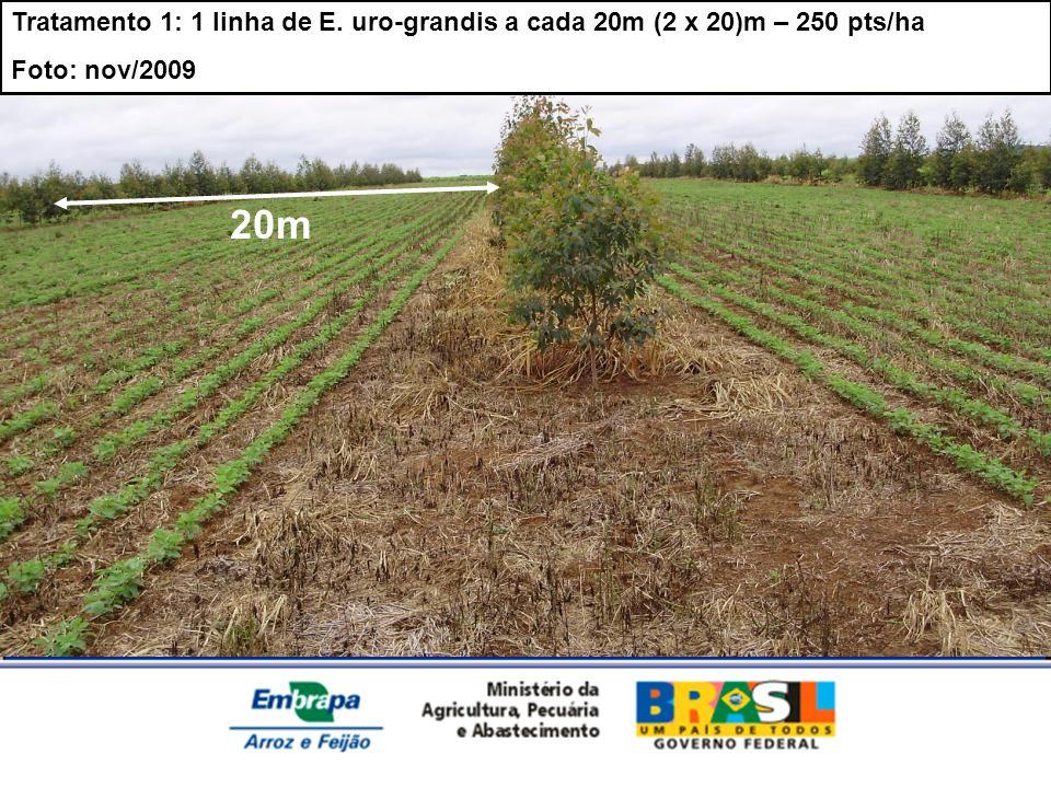 Tratamento 1: 1 linha de E. uro-grandis a cada 20m (2 x 20)m – 250 pts/ha