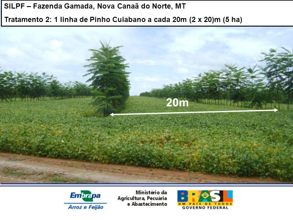 20m SILPF – Fazenda Gamada, Nova Canaã do Norte, MT
