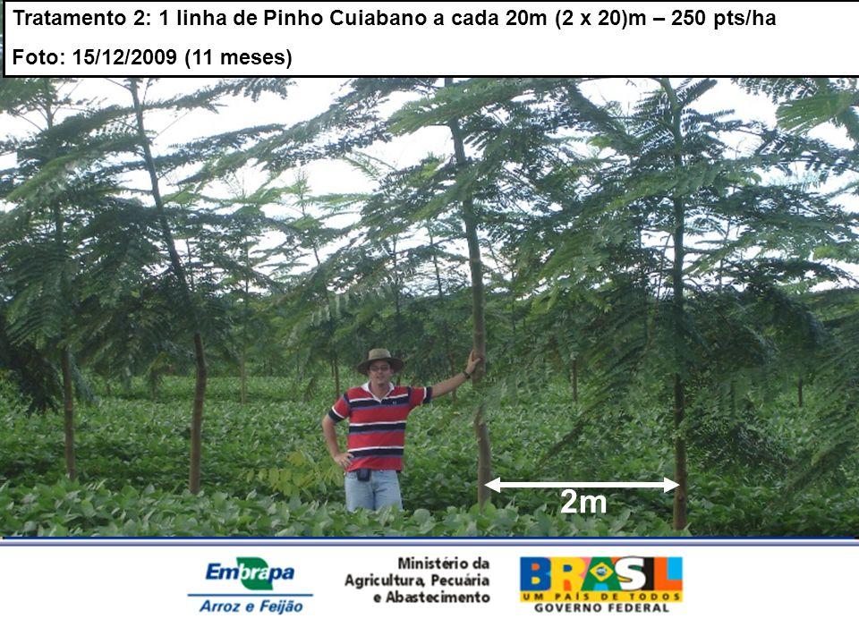Tratamento 2: 1 linha de Pinho Cuiabano a cada 20m (2 x 20)m – 250 pts/ha