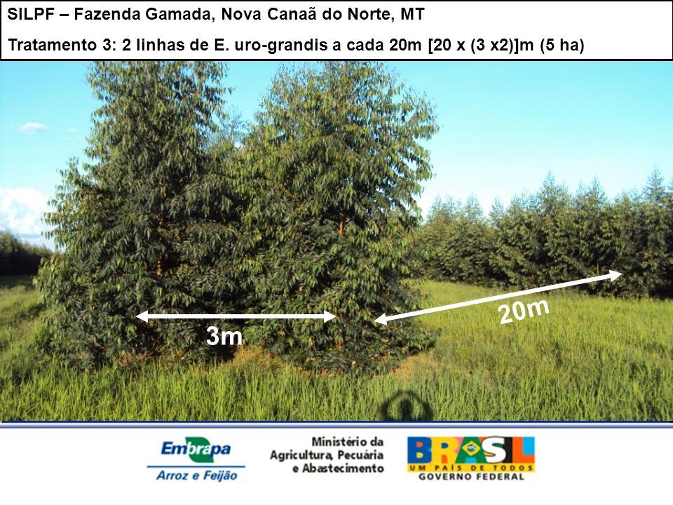 20m 3m SILPF – Fazenda Gamada, Nova Canaã do Norte, MT