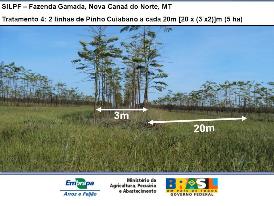 3m 20m SILPF – Fazenda Gamada, Nova Canaã do Norte, MT