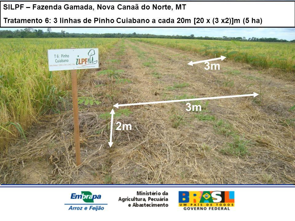 3m 3m 2m SILPF – Fazenda Gamada, Nova Canaã do Norte, MT