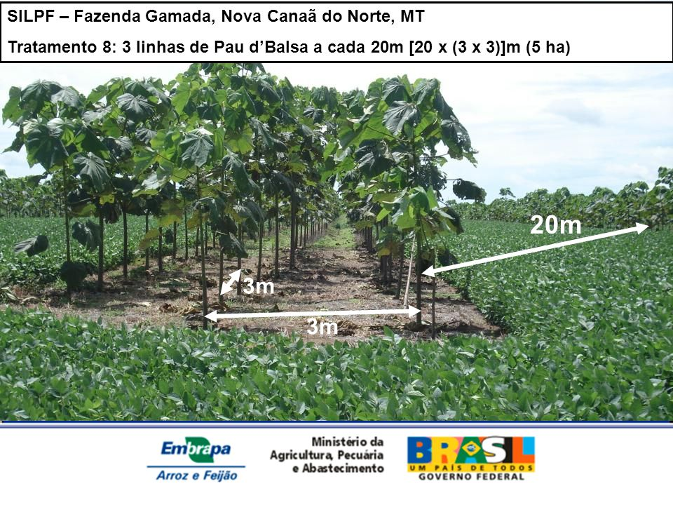 20m 3m 3m SILPF – Fazenda Gamada, Nova Canaã do Norte, MT
