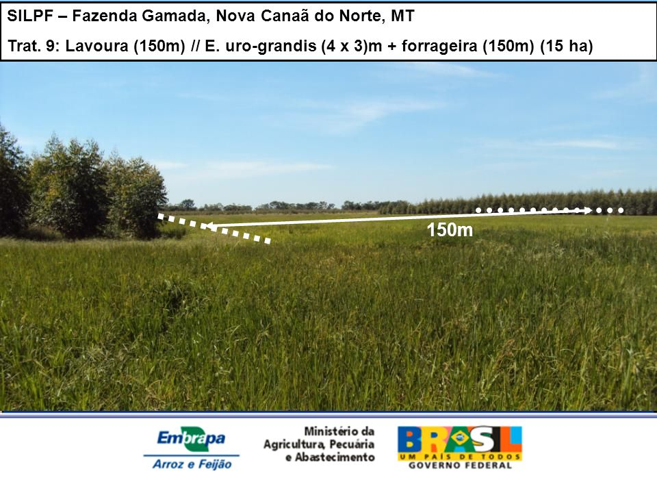 150m SILPF – Fazenda Gamada, Nova Canaã do Norte, MT