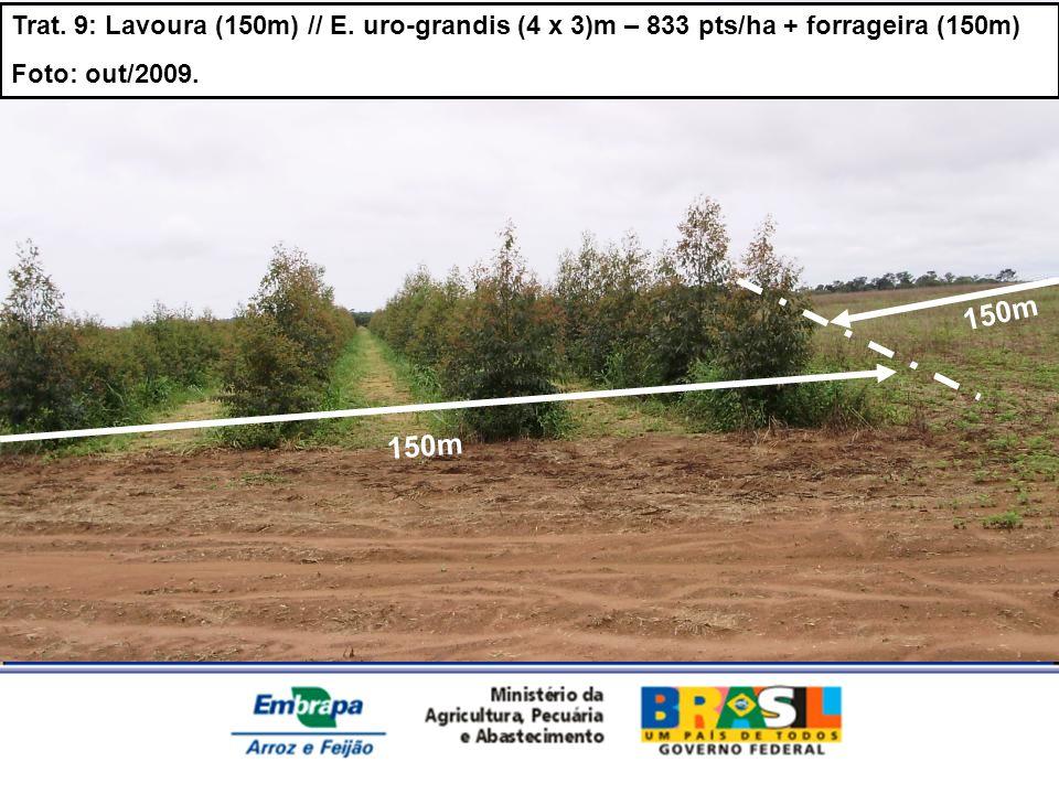 Trat. 9: Lavoura (150m) // E. uro-grandis (4 x 3)m – 833 pts/ha + forrageira (150m)
