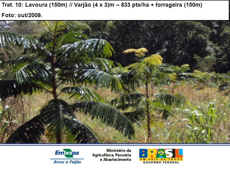 Trat. 10: Lavoura (150m) // Varjão (4 x 3)m – 833 pts/ha + forrageira (150m)