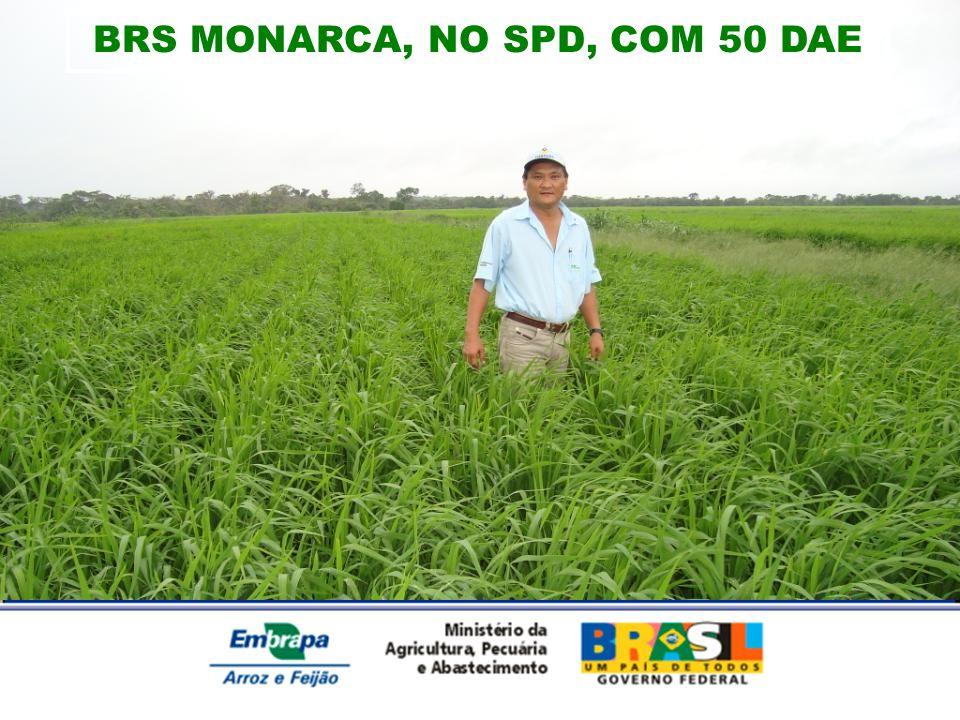 BRS MONARCA, NO SPD, COM 50 DAE