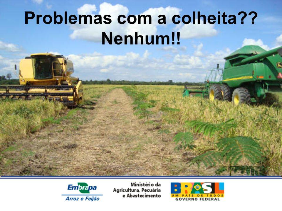 Problemas com a colheita Nenhum!!