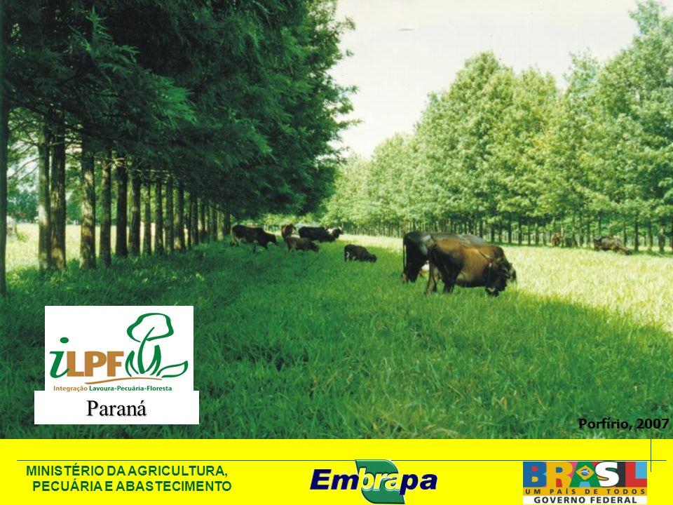 Paraná Porfírio, 2007 76