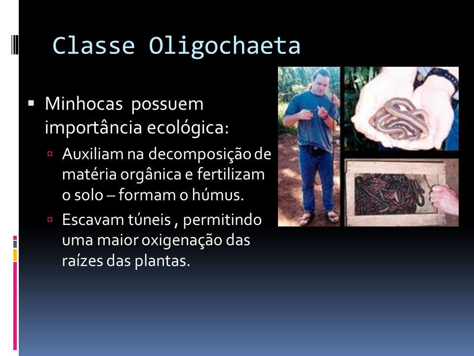 Classe Oligochaeta Minhocas possuem importância ecológica: