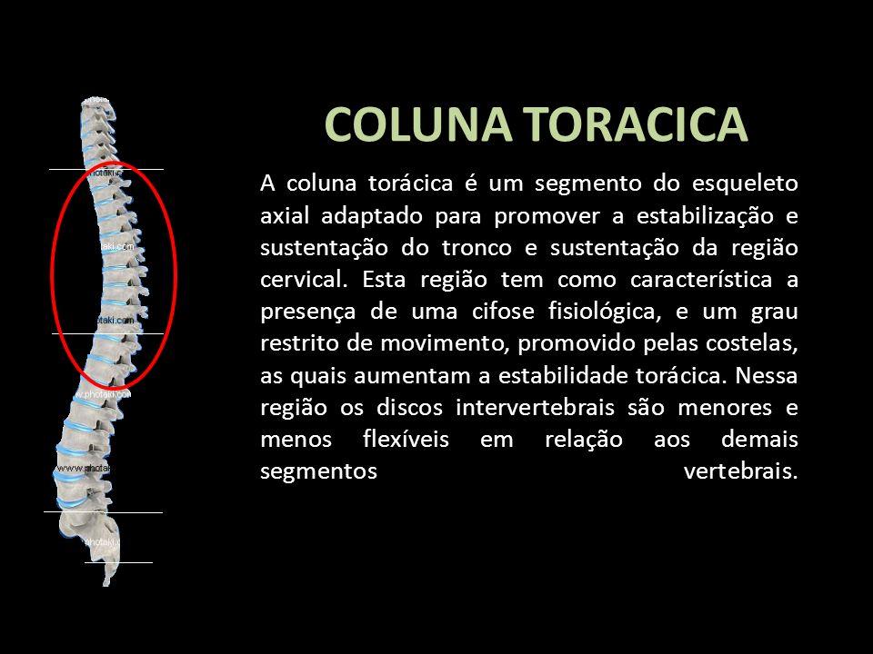 COLUNA TORACICA