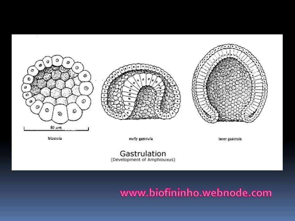 www.biofininho.webnode.com
