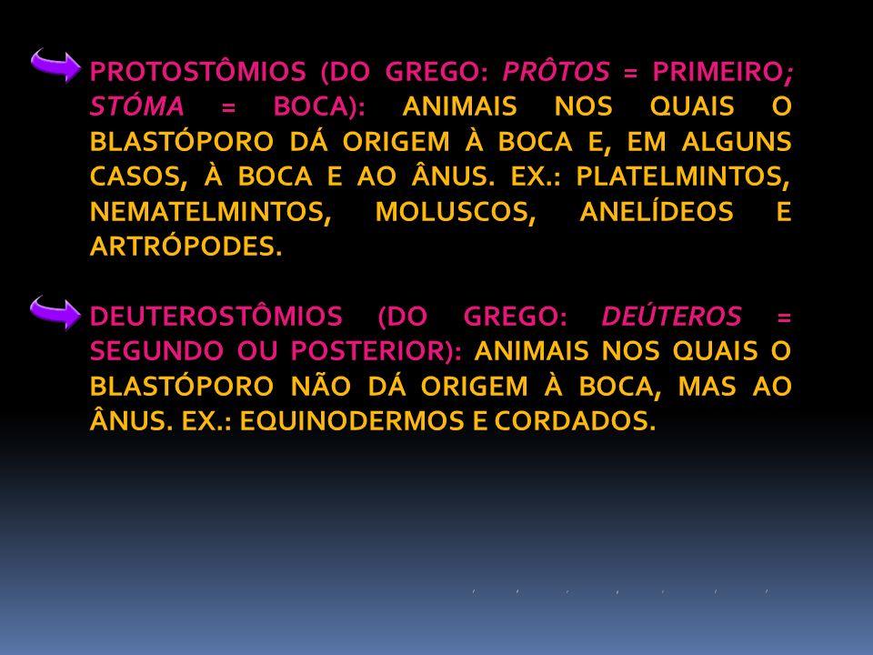 PROTOSTÔMIOS (DO GREGO: PRÔTOS = PRIMEIRO; STÓMA = BOCA): ANIMAIS NOS QUAIS O BLASTÓPORO DÁ ORIGEM À BOCA E, EM ALGUNS CASOS, À BOCA E AO ÂNUS. EX.: PLATELMINTOS, NEMATELMINTOS, MOLUSCOS, ANELÍDEOS E ARTRÓPODES.