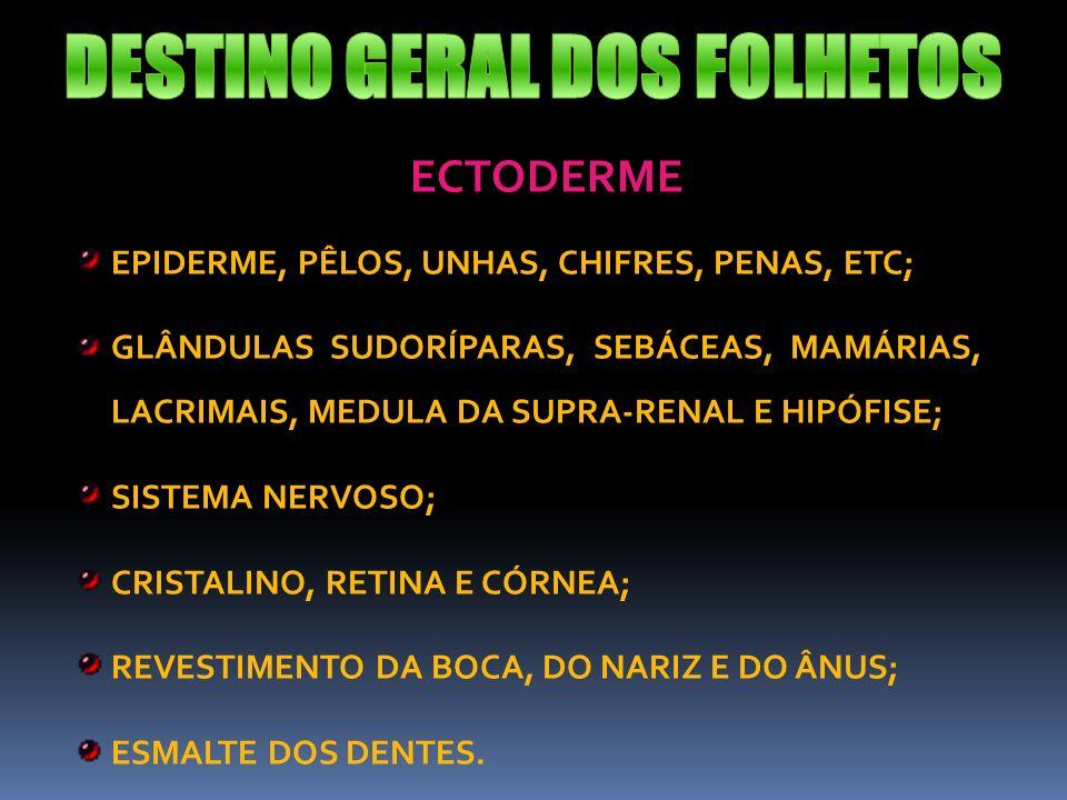 DESTINO GERAL DOS FOLHETOS