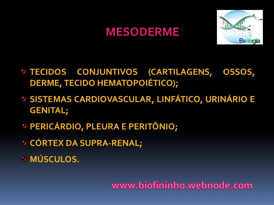 MESODERME www.biofininho.webnode.com