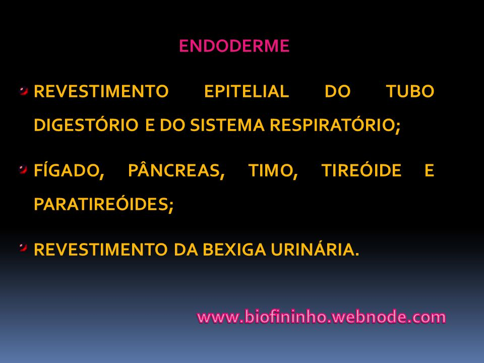 ENDODERME REVESTIMENTO EPITELIAL DO TUBO DIGESTÓRIO E DO SISTEMA RESPIRATÓRIO; FÍGADO, PÂNCREAS, TIMO, TIREÓIDE E PARATIREÓIDES;