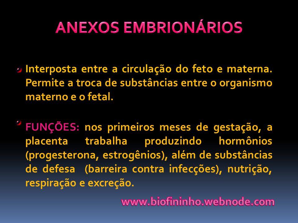 ANEXOS EMBRIONÁRIOS Interposta entre a circulação do feto e materna. Permite a troca de substâncias entre o organismo materno e o fetal.