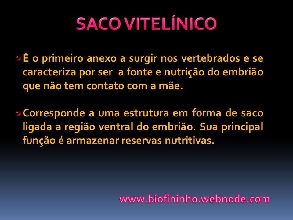 SACO VITELÍNICO É o primeiro anexo a surgir nos vertebrados e se caracteriza por ser a fonte e nutrição do embrião que não tem contato com a mãe.