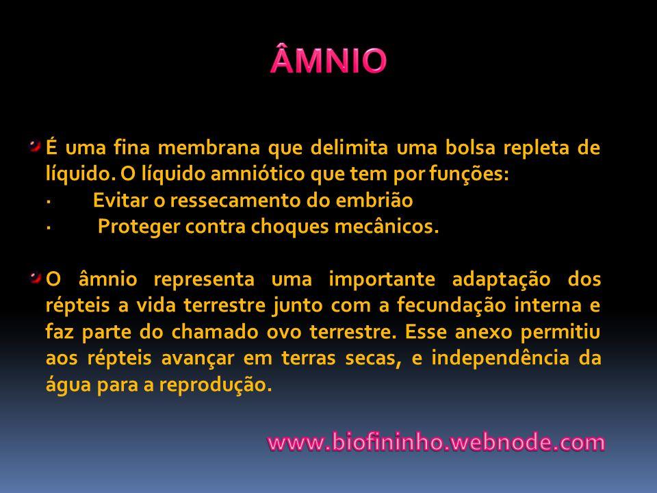 ÂMNIO www.biofininho.webnode.com
