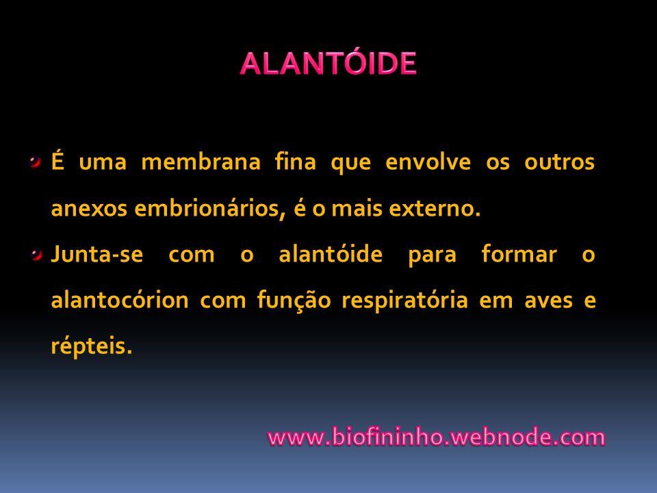 ALANTÓIDE É uma membrana fina que envolve os outros anexos embrionários, é o mais externo.