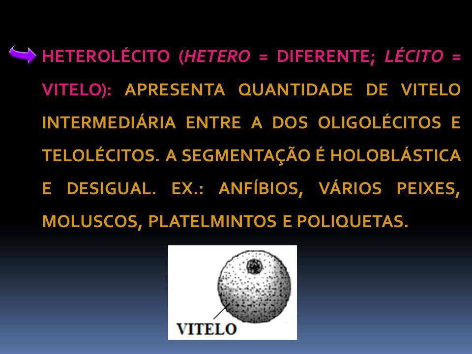 HETEROLÉCITO (HETERO = DIFERENTE; LÉCITO = VITELO): APRESENTA QUANTIDADE DE VITELO INTERMEDIÁRIA ENTRE A DOS OLIGOLÉCITOS E TELOLÉCITOS.