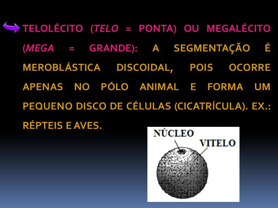 TELOLÉCITO (TELO = PONTA) OU MEGALÉCITO (MEGA = GRANDE): A SEGMENTAÇÃO É MEROBLÁSTICA DISCOIDAL, POIS OCORRE APENAS NO PÓLO ANIMAL E FORMA UM PEQUENO DISCO DE CÉLULAS (CICATRÍCULA).