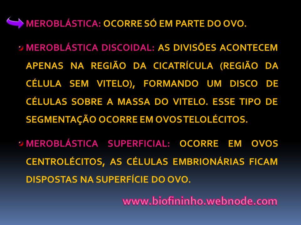 www.biofininho.webnode.com MEROBLÁSTICA: OCORRE SÓ EM PARTE DO OVO.