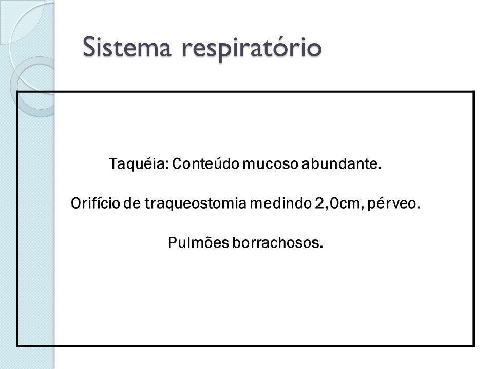 Sistema respiratório Taquéia: Conteúdo mucoso abundante.