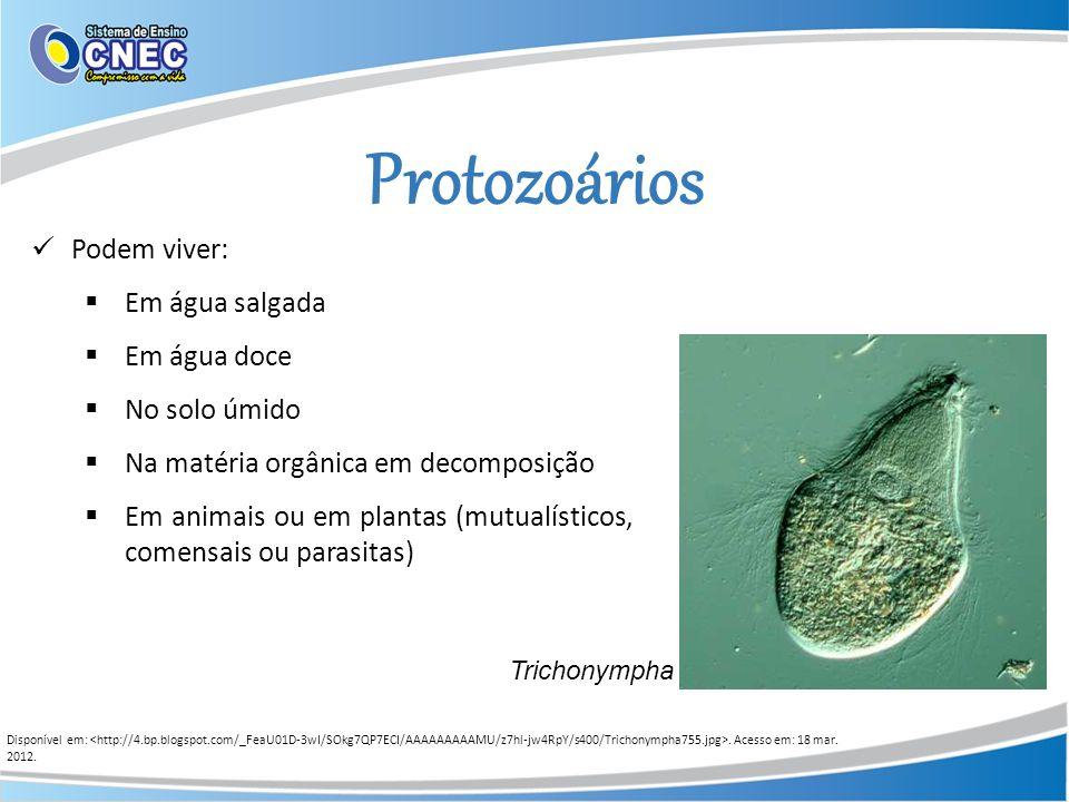 Protozoários Podem viver: Em água salgada Em água doce No solo úmido