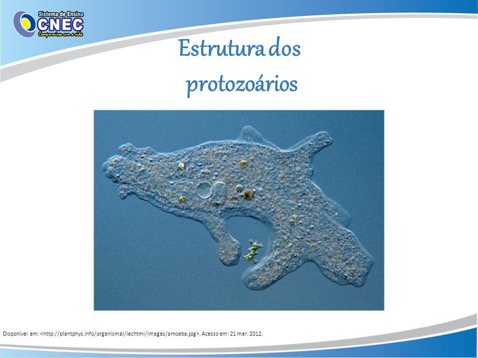 Estrutura dos protozoários