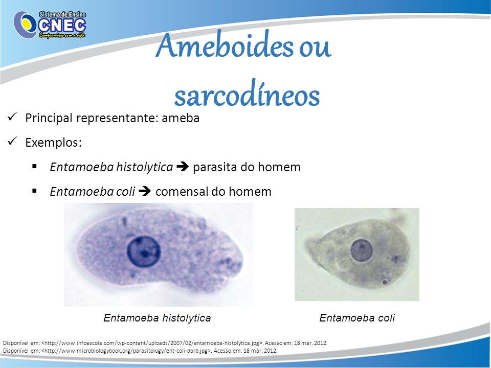Ameboides ou sarcodíneos