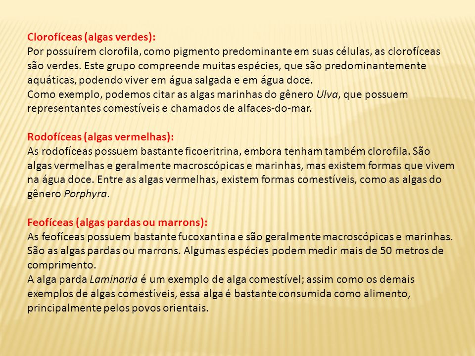 Clorofíceas (algas verdes):