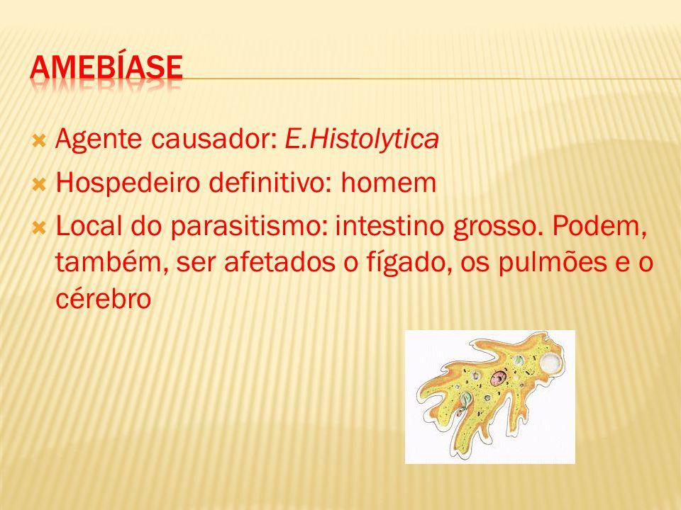 AMEBÍASE Agente causador: E.Histolytica Hospedeiro definitivo: homem