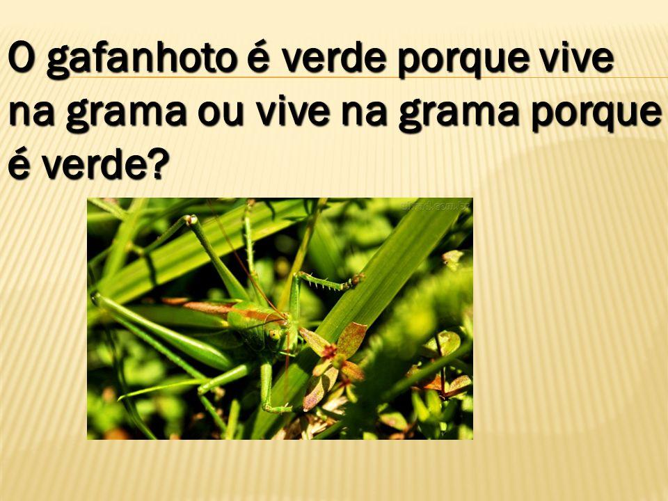 O gafanhoto é verde porque vive na grama ou vive na grama porque é verde