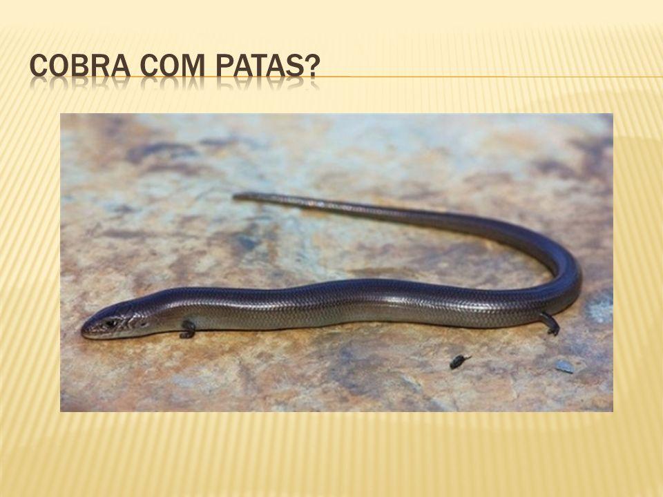 Cobra com patas