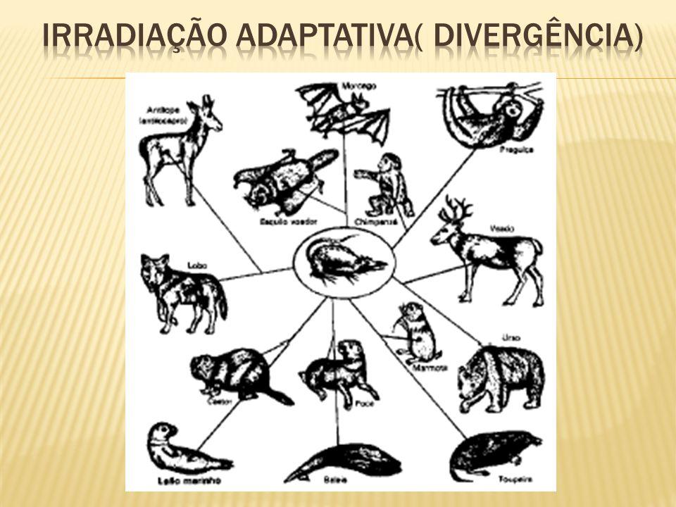 Irradiação adaptativa( divergência)