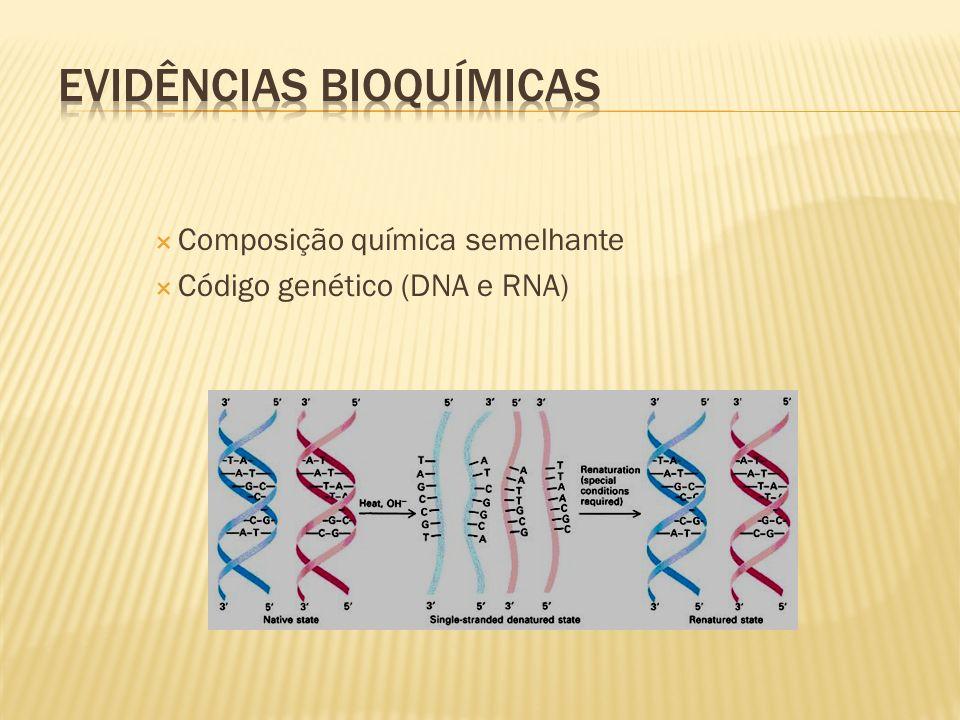 Evidências Bioquímicas