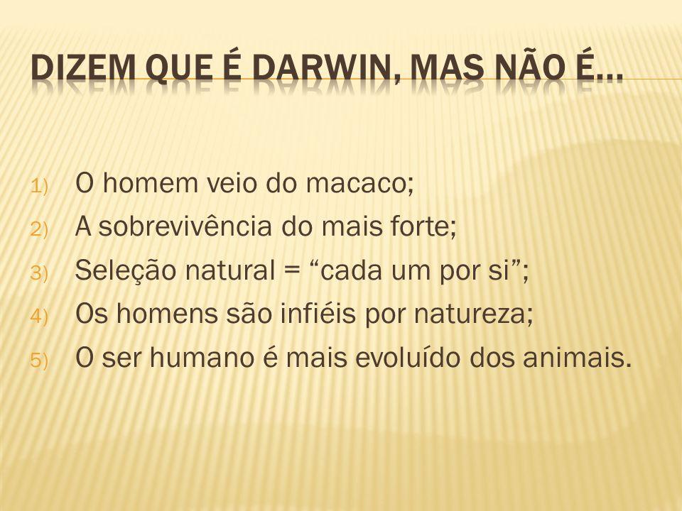 Dizem que é Darwin, mas não é...