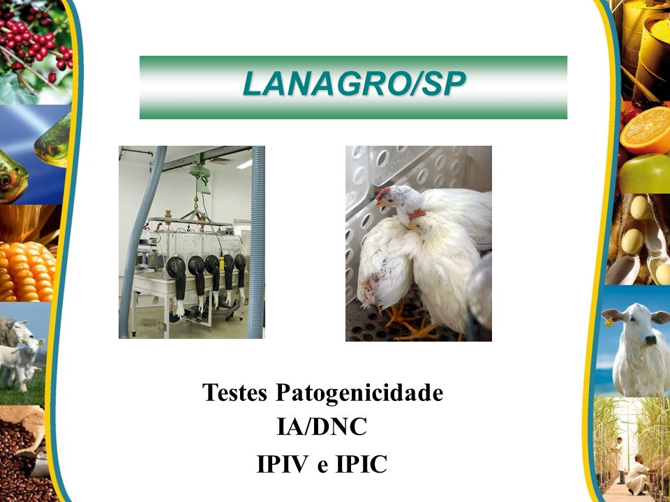 Testes Patogenicidade