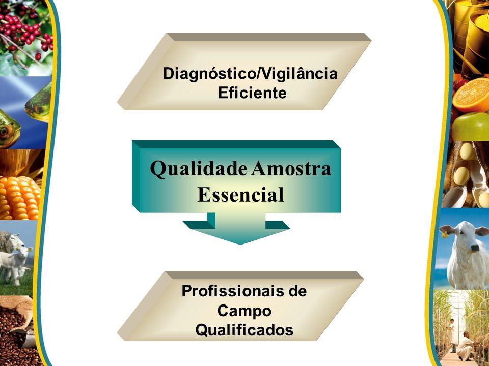 Diagnóstico/Vigilância Profissionais de Campo Qualificados