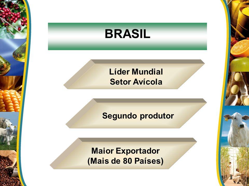 BRASIL Líder Mundial Setor Avícola Segundo produtor Maior Exportador